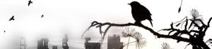 bird gotham-474253_1280 banner
