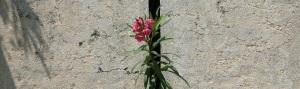 duality plant-742257_1280 bannr